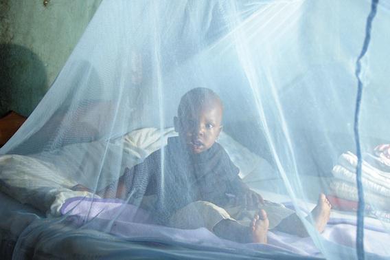 Paludisme : l'éradication menacée