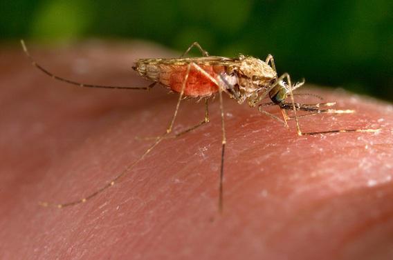 Le paludisme éradiqué au  Sri Lanka