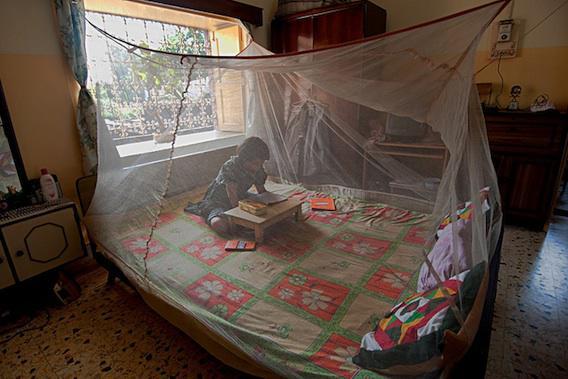 Paludisme : un vaccin expérimental s'avère prometteur