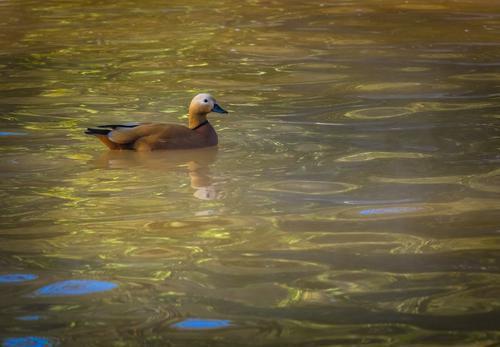 Grippe aviaire : une enquête lancée pour tromperie aggravée
