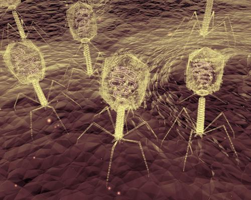 Antibiorésistance : le retour de la phagothérapie