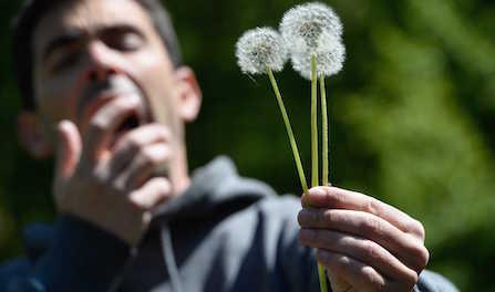 Allergies au pollen : une grande partie de la France dans le rouge