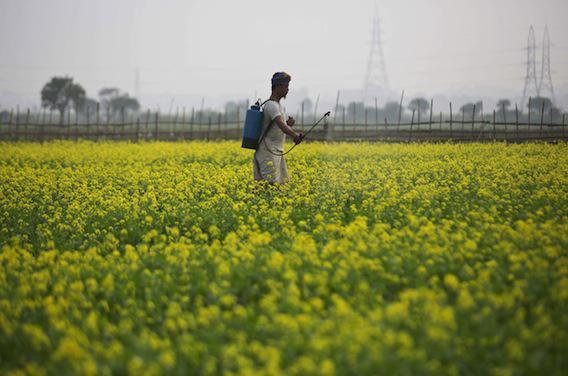 Pourquoi Stéphane Le Foll veut limiter l'usage d'un pesticide
