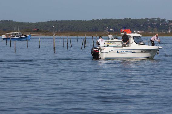 Bassin d'Arcachon : moules et coquillages à nouveau consommables