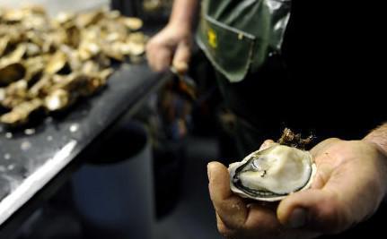 Gastro-entérite : les huîtres favoriseraient la maladie chez l'humain