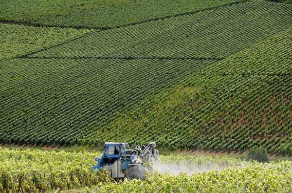 Pesticides : la famille d'un viticulteur porte plainte contre X