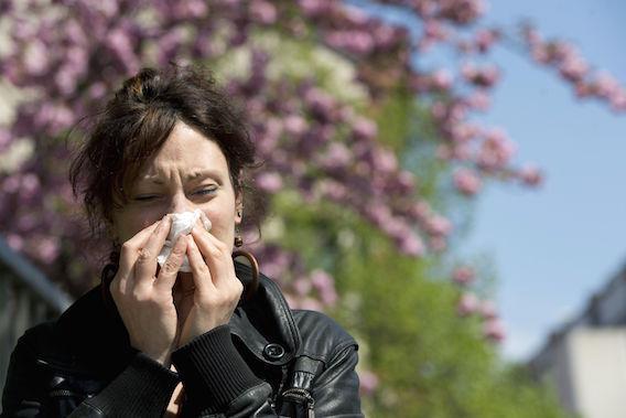 Allergies : le changement climatique augmente les risques