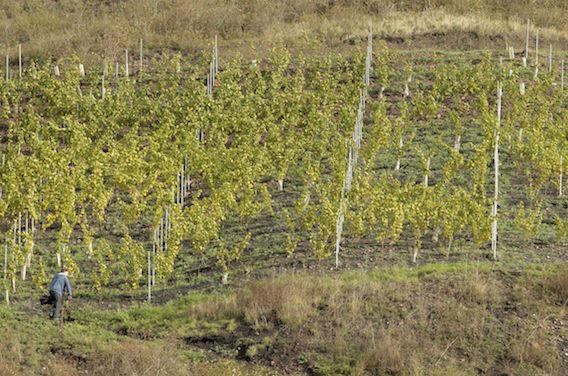 Pesticides : cas de cancers pédiatriques dans une commune viticole de Gironde