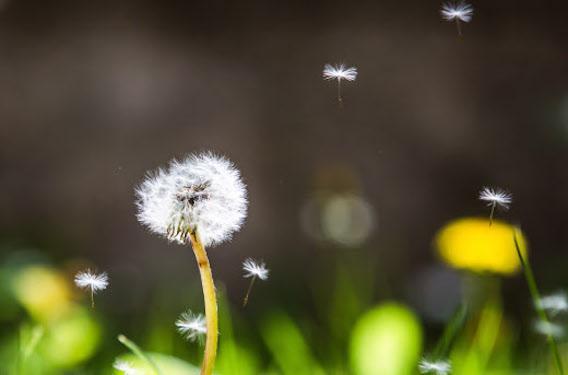 Allergies :  toute la France envahie par les pollens de graminées