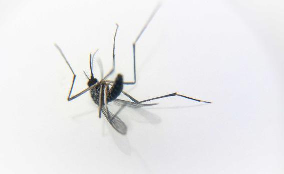 Malaria : un nouveau médicament pour un dollar