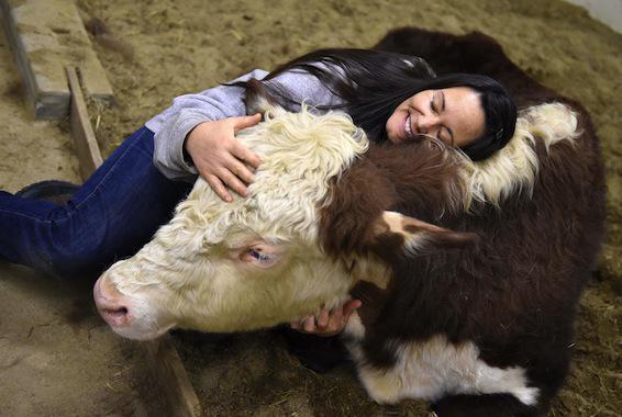 Allergies : vivre à la ferme réduirait les problèmes respiratoires
