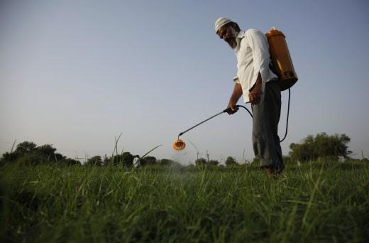 Manger bio pour réduire les pesticides dans l'organisme