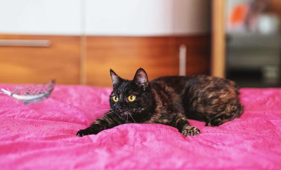 Regarder des vidéos de chats serait bénéfique pour la santé