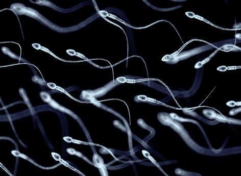 Covid-19 : peut-elle affecter le sperme des hommes et avoir des effets sur le système immunitaire de futurs enfants?
