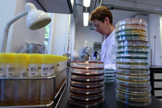 Staphylocoque doré : des Français découvrent deux cibles thérapeutiques