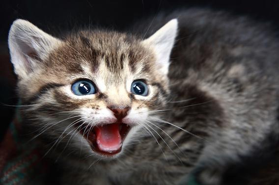 Rage : un avis de recherche lancé à Nantes pour un chaton