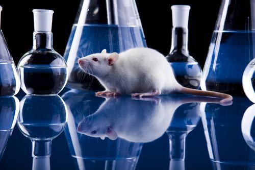 Développements thérapeutiques : qu'apportent les modèles animaux ?