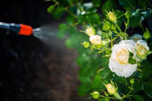 Pesticides dans l'air : Paris aussi touchée que les campagnes