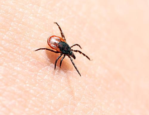 Maladie de  Lyme : une manifestation à Paris pour alerter