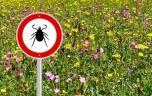 Il faut prendre des précautions contre la maladie de Lyme