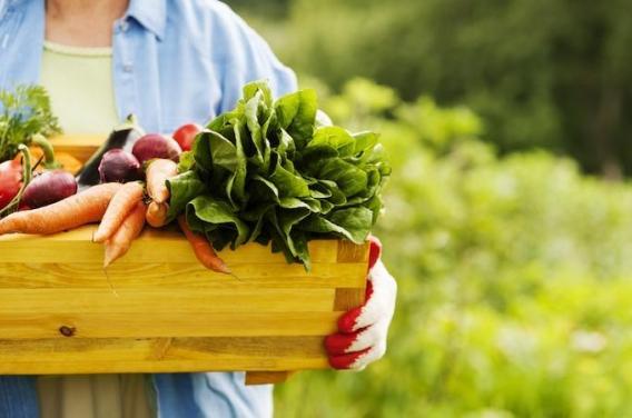 Alimentation : les Français raffolent du bio