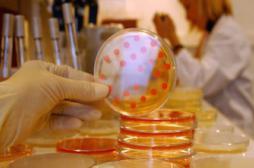 Antibiorésistance : l'OMS dénonce une menace devenue réalité
