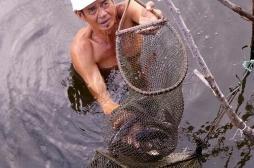 Thaïlande: du poisson cru responsable de cancers du foie