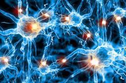 Douleur : seuls 30 neurones gèrent la libération d'ocytocine