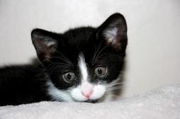 Japon: une femme meurt après la morsure d'un chat infecté par une tique