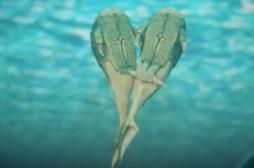 Microbrachius dicki : le poisson précurseur des relations sexuelles