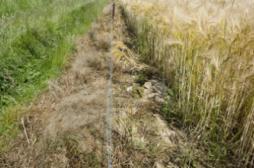 Pesticides : les effets s'étendent sur...