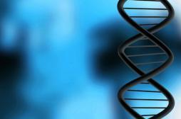 Un ADN vieux de 400 000 ans livre ses...