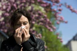 Allergies: déferlement de pollens d'armoise attendu