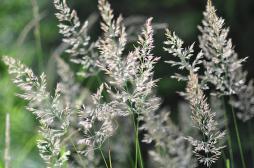 Pollens : la saison des allergies est bien ouverte