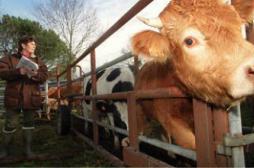 Antibiotiques chez les animaux : les autorités sonnent l'alerte
