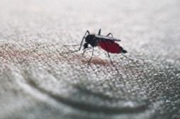 De nouveaux répulsifs anti-moustiques pour combattre les épidémies