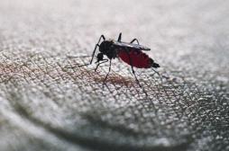 VIDEO : un moustique en action filmé...