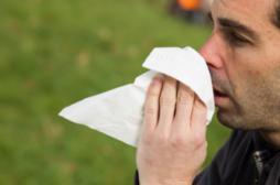 Allergie : premier pic des pollens d'ambroisie le 15 août