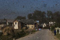Peste : 71 morts en six mois à Madagascar
