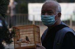 Grippe aviaire : premier décès dû au...