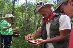 Alerte sur les intoxications aux champignons en France