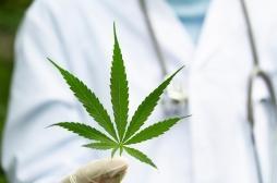 Le débat sur l'utilisation du cannabis thérapeutique