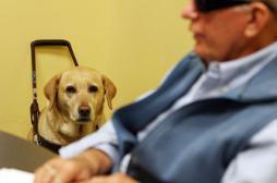 Une association d'aide aux aveugles...
