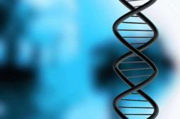 De nouveaux marqueurs génétiques pour confondre les criminels