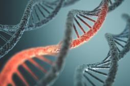 CRISPR-Cas9 : la technique a été utilisée pour la première fois chez l'homme
