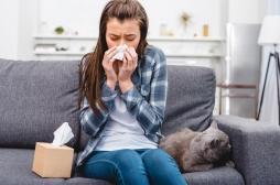 A la recherche des cellules responsables des allergies