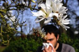 Allergies : une semaine dominée par les graminées