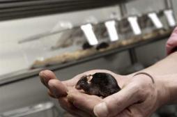Alzheimer : de nouveaux éléments en faveur d'une origine inflammatoire
