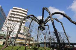 Phobie des araignées : un comprimé de bêtabloquant pour en finir
