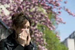 Pollen : comment se déclenche une réaction allergique